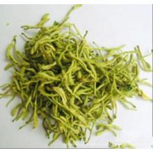 Lonicera japonica Thunb.blume