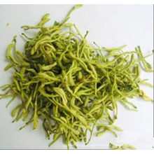 Lonicera japonica Thunb.flower