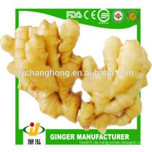 2014 neue Ernte frischen Ingwer 10kg / ctn Linyi Herkunft