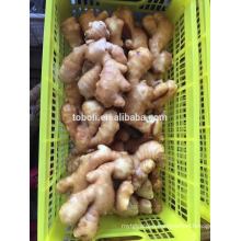 150g up Fresh Ginger/Air Dry Ginger In China