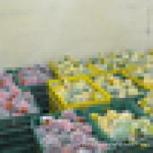 2015-2016 pimienta de color / pimiento verde