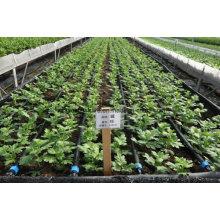 Cinta de goteo agrícola para riego de jardines