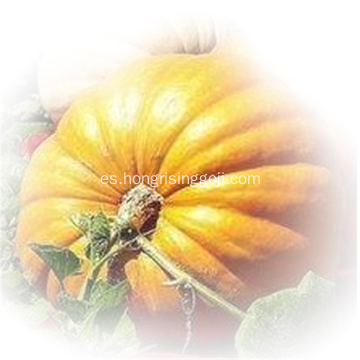 Bulk Shine Skin Pumpkin Seed of New Crop