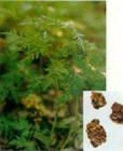 High Quality Sinomenium Extract