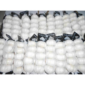 Pure white garlic small size
