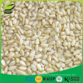 high quality pine nut kernels