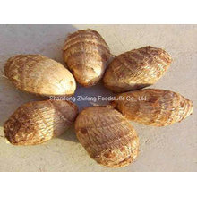Top Quality Fresh Taro for Exporting