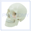 PNT-0150 classic medical science skull model