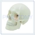 ПНТ-0150 подгонять классический человеческий череп модель для больницы