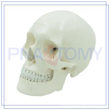 PNT-0150 3 parts classic human skull model