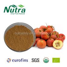 Poudre d'extrait de fruits/feuilles d'aubépine biologique