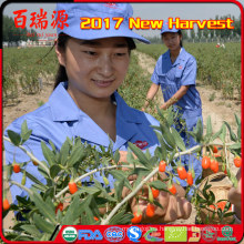 meriendas saludables milagro baya frutas congeladas wolfberry Ningxia goji berry