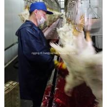 Tueur automatique de gros poulet