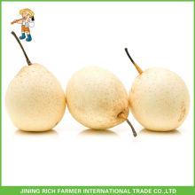 Wholesale High Quality China Fruit Sweet Fresh Ya Pears