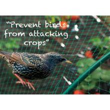filet anti-oiseaux en polyéthylène