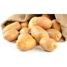 Grande batata doce amarela Exportar batata doce chinesa batata doce