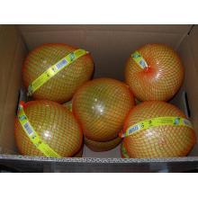 Frische neue Ernte Honig Pomelo