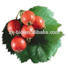 GMP Supply Price Rose Hip Extract powder