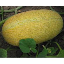 RSM05 Wobi petite taille hybride super doux graines de melon hami