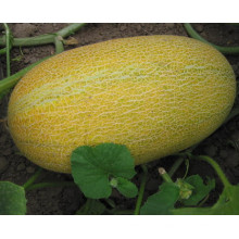 RSM05 Wobi small size hybrid super sweet hami melon seeds