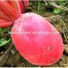 MR04 Hongpeng op graines de radis rouges de graines de légumes chinois