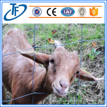 Hot-dipped Galvznied Cattle fence/ Electrol Galvanized field fence/grassland fence