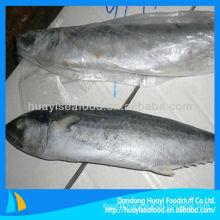 fresh frozen Japanese Spanish mackerel fish