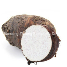 Nouveau Taro frais bio de culture