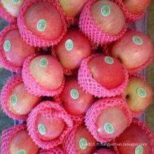 La nouvelle récolte de pommes Qinguan arrive bientôt