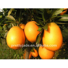 Navel Orange from china