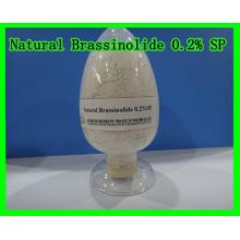 Natural Brassinolide 0,2% Sp-Hormona vegetal