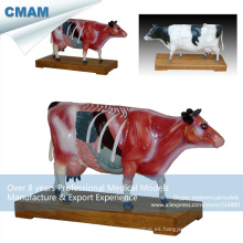 A08 (12007) Vacuno veterinario modelos anatómicos de acupuntura de vaca 12007