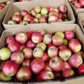 QinGuan Fresh Apples