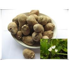 Factory Natural Rhizoma Alismatis/ Alisma Plantago-Aquatica 10: 1 Extract Powder
