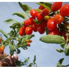 2018 neue frische Non GMO Goji Berry