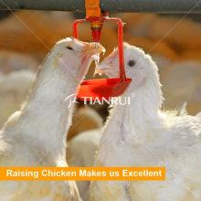Tianrui Poultry Farm Automatic Sistema de bebedero de pezones de pollo