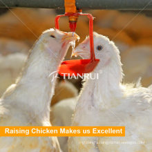 Good Design Automatic Poultry Nipple Drinking System