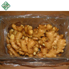 China fresh ginger export the world