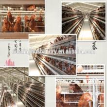 Cage de transport de poulet chinoise professionnelle à bas prix