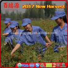 Baya de Goji nueva cosecha de frutas para diabéticos frutos secos