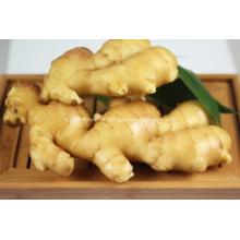 Fresh Ginger/Air Dry Ginger for Export