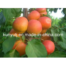 Apricot Puree with High Quality