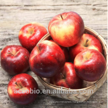 100% Natural Certificated Organic Apple Fruit Juice Extract Powder