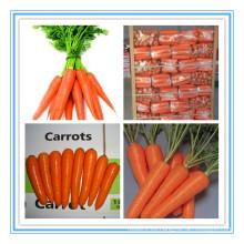 2015 Nuevas zanahorias rojas vegetales