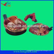 Модель высокого качества медицинского сердца для продажи новый стиль 4 раза увеличенное пластическое анатомическое сердце