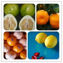 Orang frais (nombril, mandarine, lugan, polemo, citron)