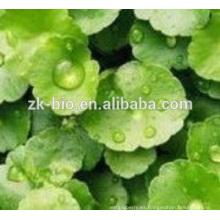 polvo de alta calidad del extracto de Centella asiatica