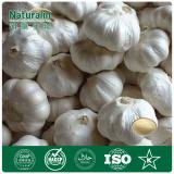 Natural Allium Sativum L