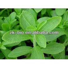 Extracto de Stevia de alta calidad 98% de esteviósido