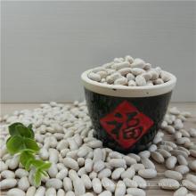2016 récolte haricots blancs prix / haricots Haricot / haricots au four